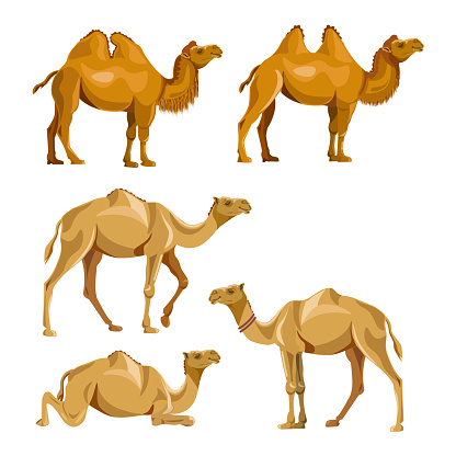Collection of vector camels