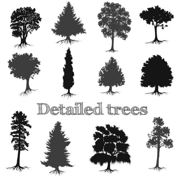 Collection of vector detailed hand drawn trees silhouettes for design Collection of vector detailed hand drawn trees silhouettes for design treelined stock illustrations
