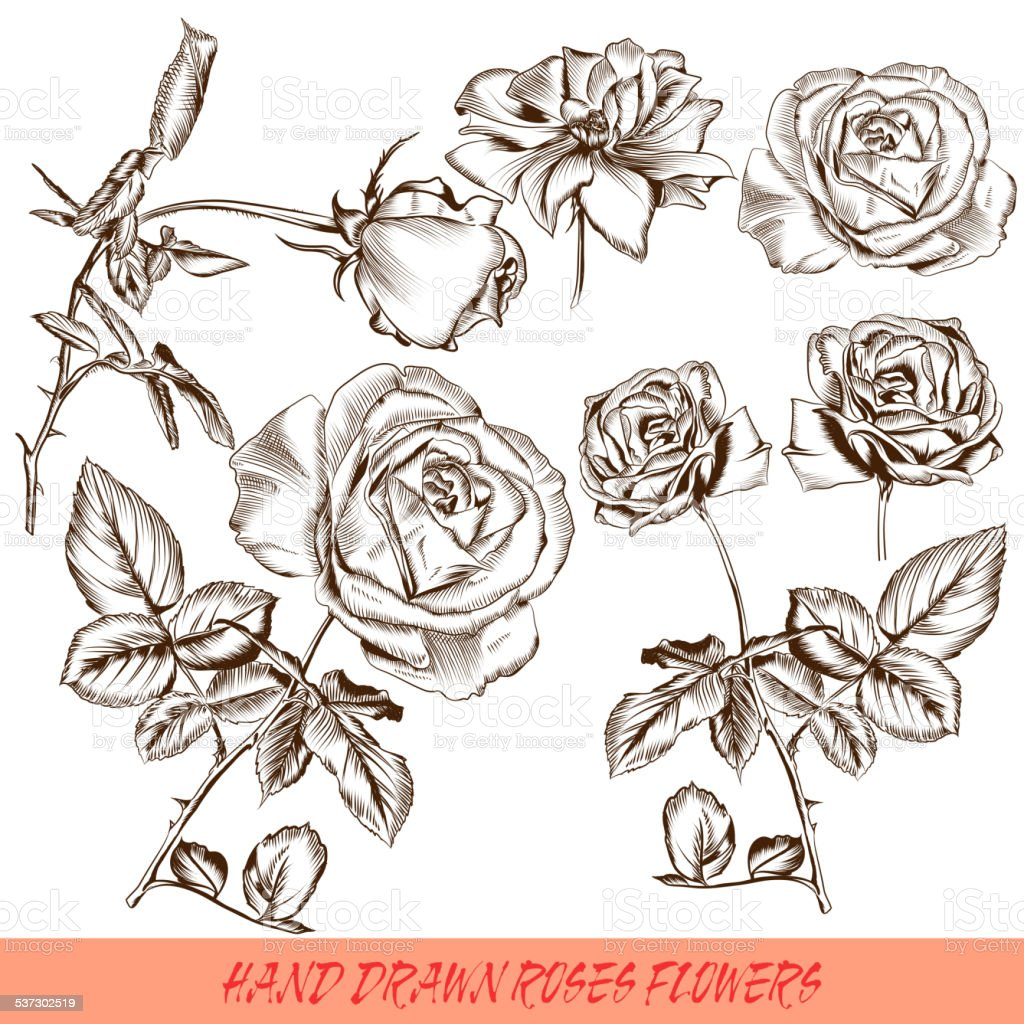 Collection of vector engraved roses in antique style vector art illustration