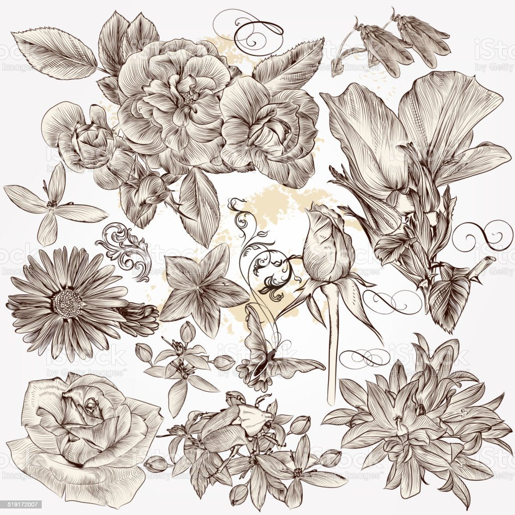 Collection of vector hand drawn detailed flowers for design vector art illustration