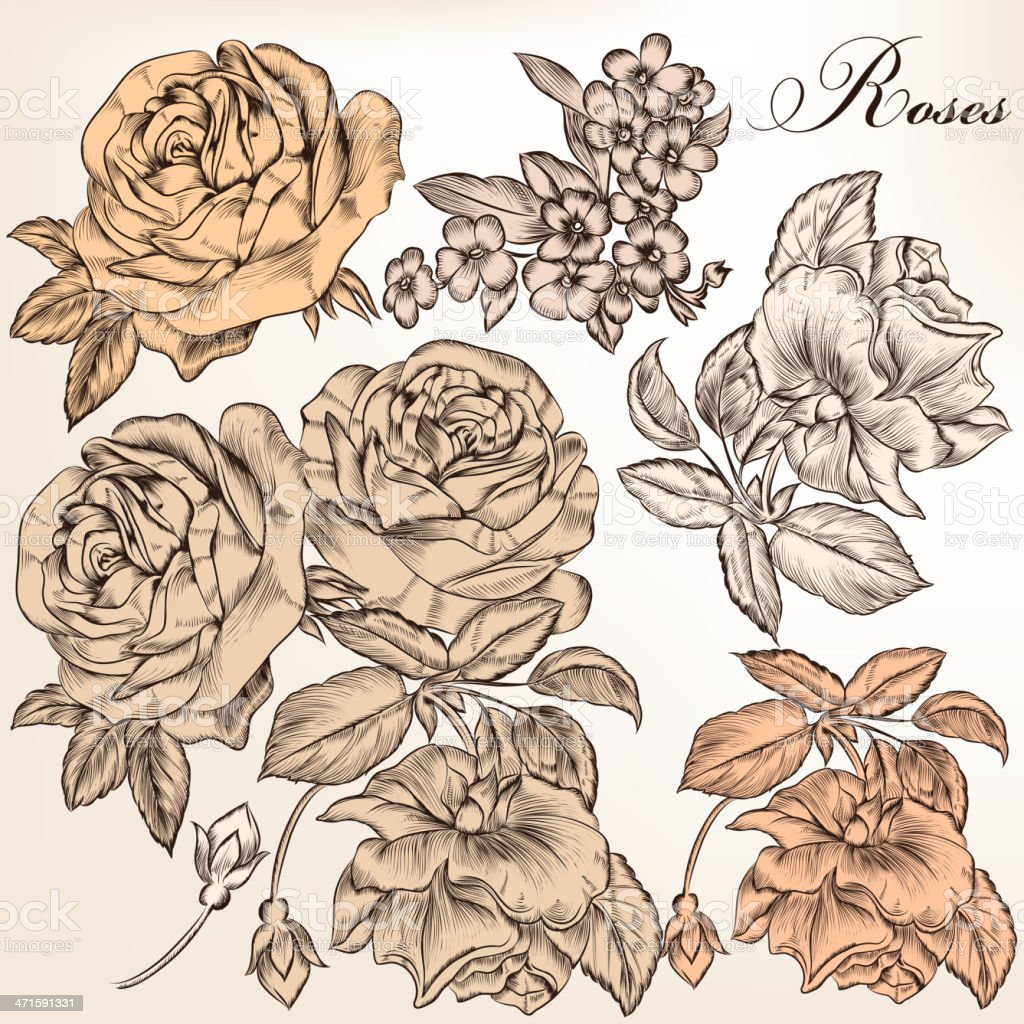 Collection of vector hand drawn detailed roses for design vector art illustration