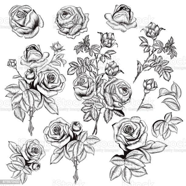 Collection of vector hand drawn roses for design in engraved style vector id875970432?b=1&k=6&m=875970432&s=612x612&h=wphzujlznvagunwtaabl40y5rcfr65pe4zda9acdm6e=