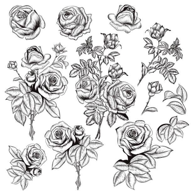 向量手繪玫瑰在雕刻風格設計中的收藏 - 鄉愁 幅插畫檔、美工圖案、卡通及圖標