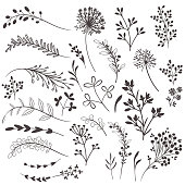 Collection of vector rustic plants for design