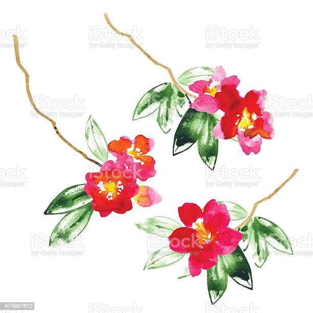 Collection of watercolor camellia flowers vector id474907812?b=1&k=6&m=474907812&s=612x612&h=g9pfltfgpfunctqltzfofmalajcc38029fgtzngb4ya=