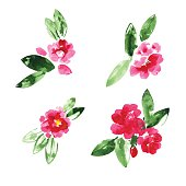 Set of red watercolor camellia flowers