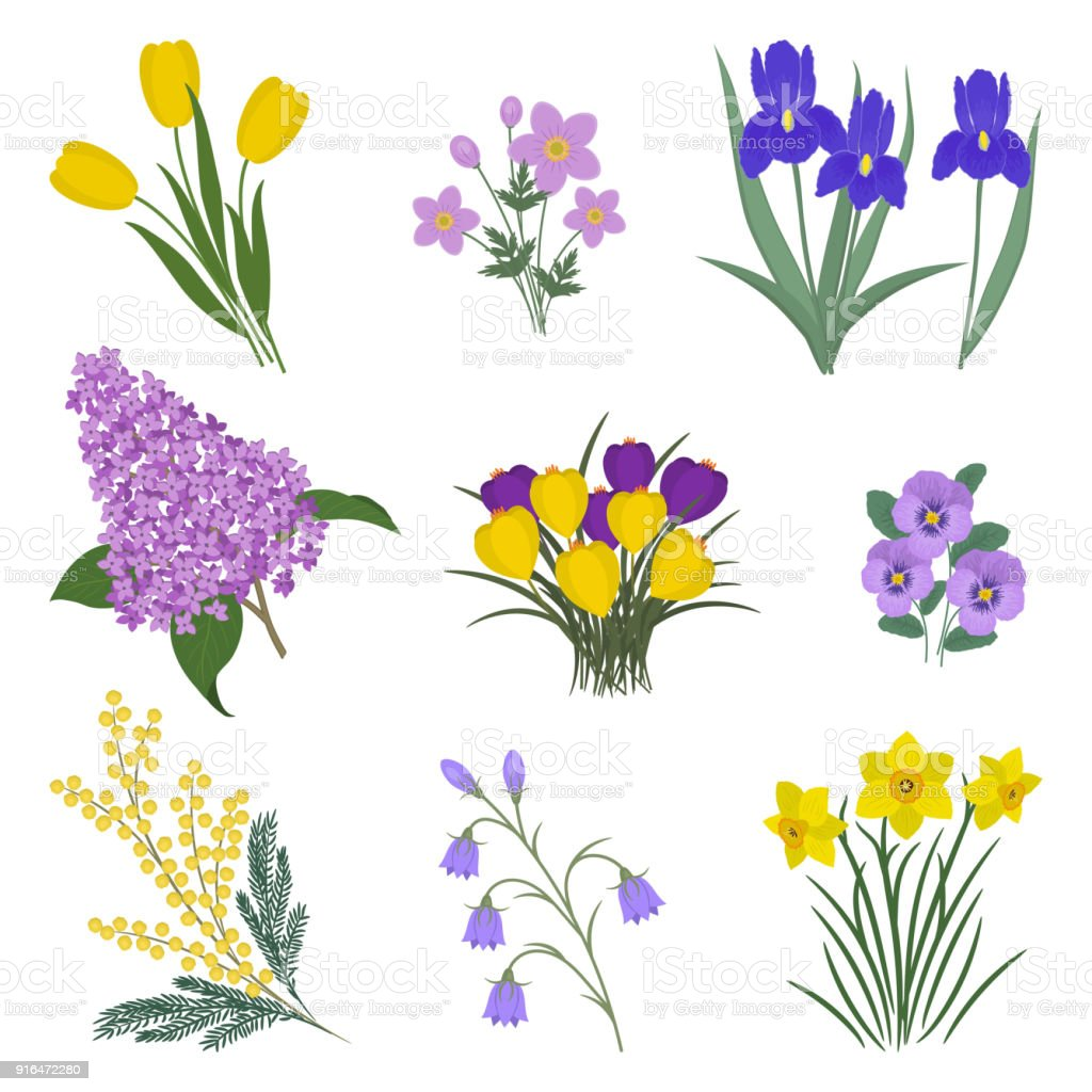 Collection Of Yellow And Purple Flowers On A White Background Stock