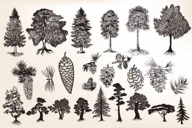 collection or set of hand drawn trees in engraved style Big collection or set of hand drawn trees in engraved style treelined stock illustrations