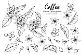 istock Collection set of coffee flower and leaves drawing illustration. 1138204959