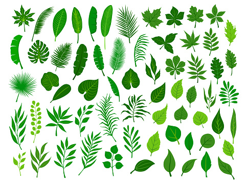 collection set of different green tropical, forest, park tree leaves branches twigs plants foliage herbs