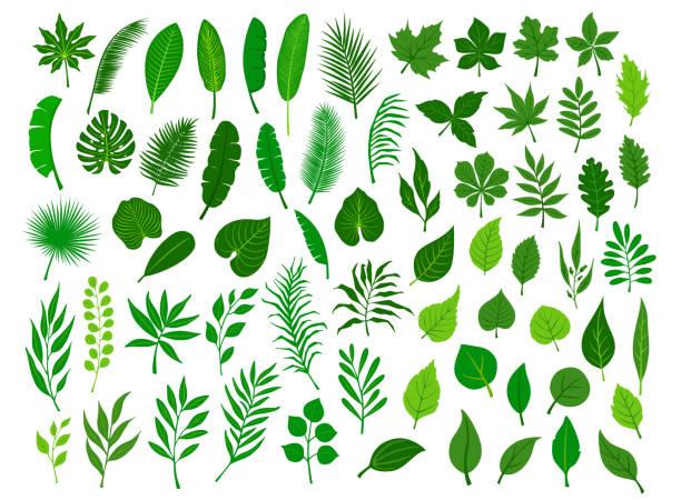 kolekcja zestaw różnych zielonych tropikalnych, las, park drzewo pozostawia gałęzie gałązki rośliny liści ziół - gałązka stock illustrations