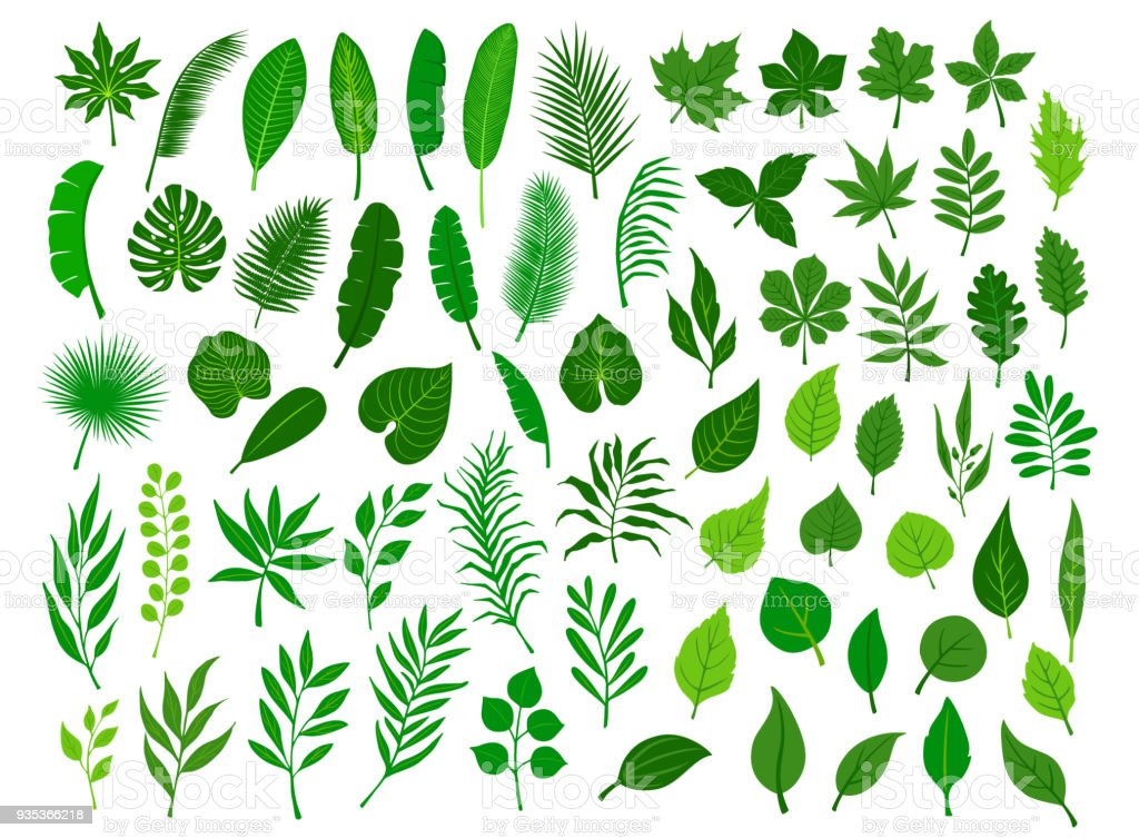 collection set of different green tropical, forest, park tree leaves branches twigs plants foliage herbs vector art illustration