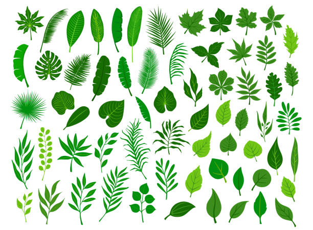 illustrazioni stock, clip art, cartoni animati e icone di tendenza di collection set of different green tropical, forest, park tree leaves branches twigs plants foliage herbs - foglie