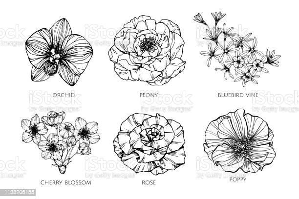 Collection set of flower drawing illustration vector id1138205155?b=1&k=6&m=1138205155&s=612x612&h=lnzmpfqfiv5uo qbr8jw7xbq waq0a 8sjjtxb0zp84=