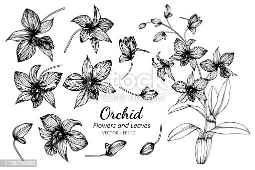 Collection set of orchid flower and leaves drawing illustration. for pattern, logo, template, banner, posters, invitation and greeting card design.