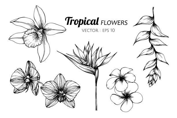 Collection set of Tropical flower drawing illustration. Collection set of Tropical flower drawing illustration. for pattern, logo, template, banner, posters, invitation and greeting card design. bird of paradise plant stock illustrations
