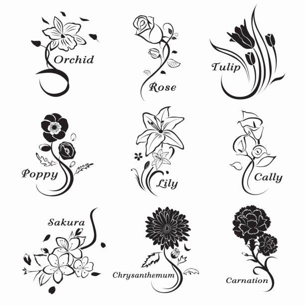 Collection-de-exposé-fleurs - Illustration vectorielle