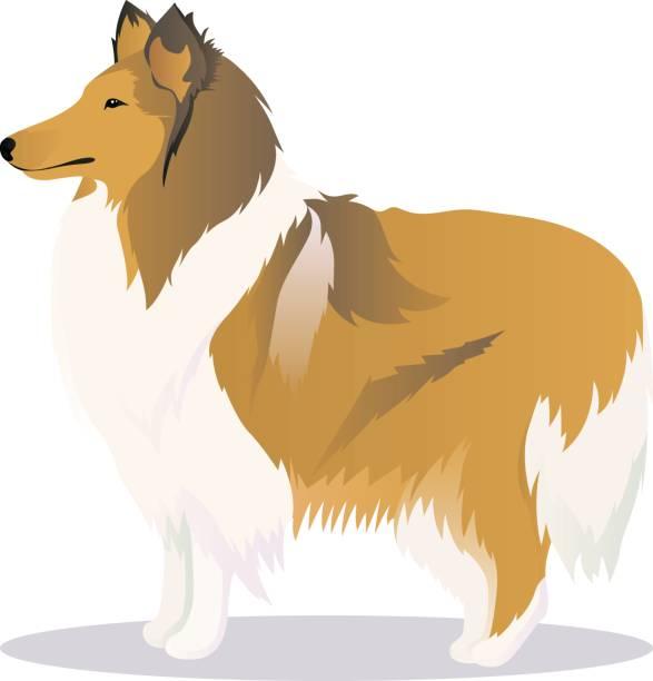 collie hund - collie stock-grafiken, -clipart, -cartoons und -symbole