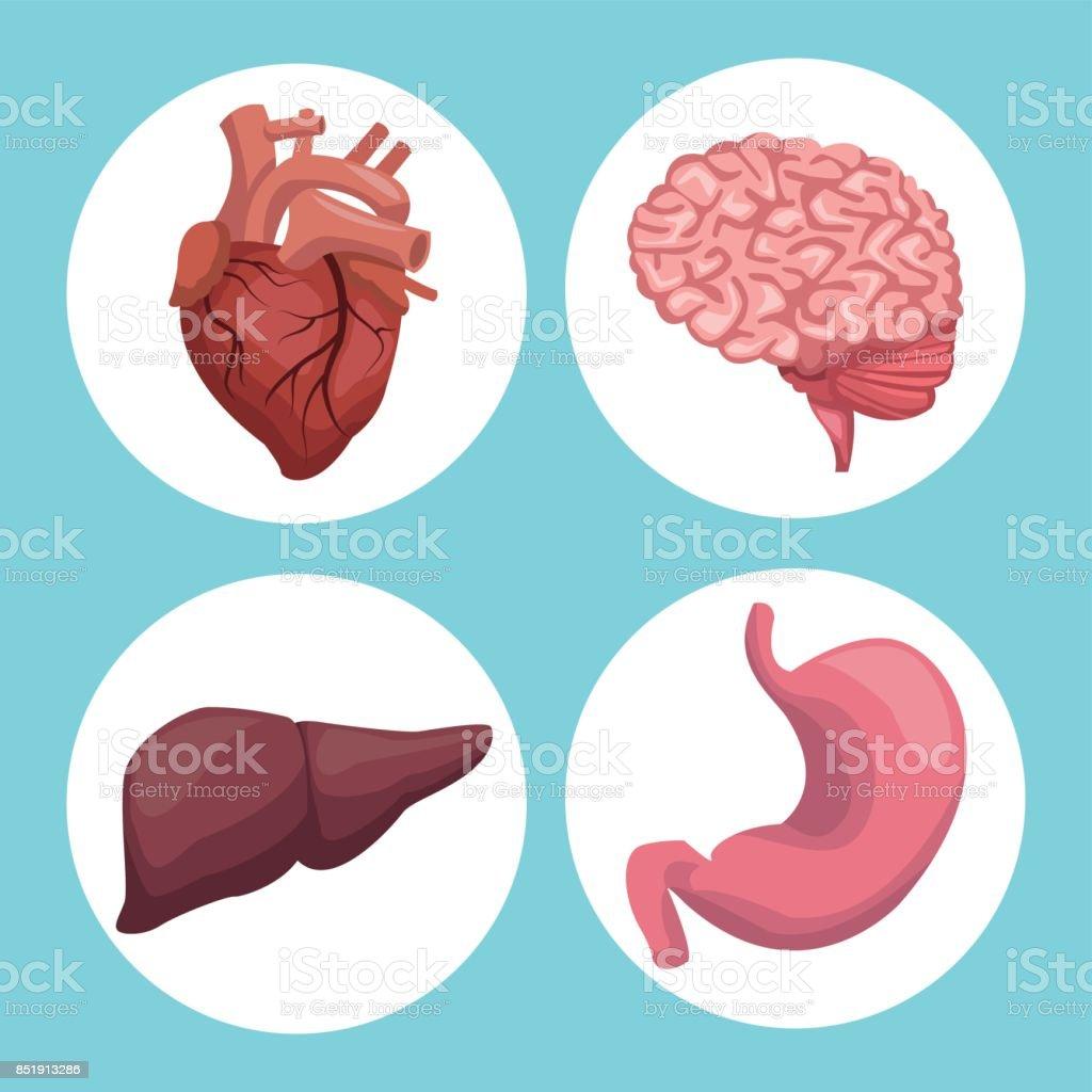 Ilustración de Color De Fondo Con órganos Marco Circular Cuerpo ...