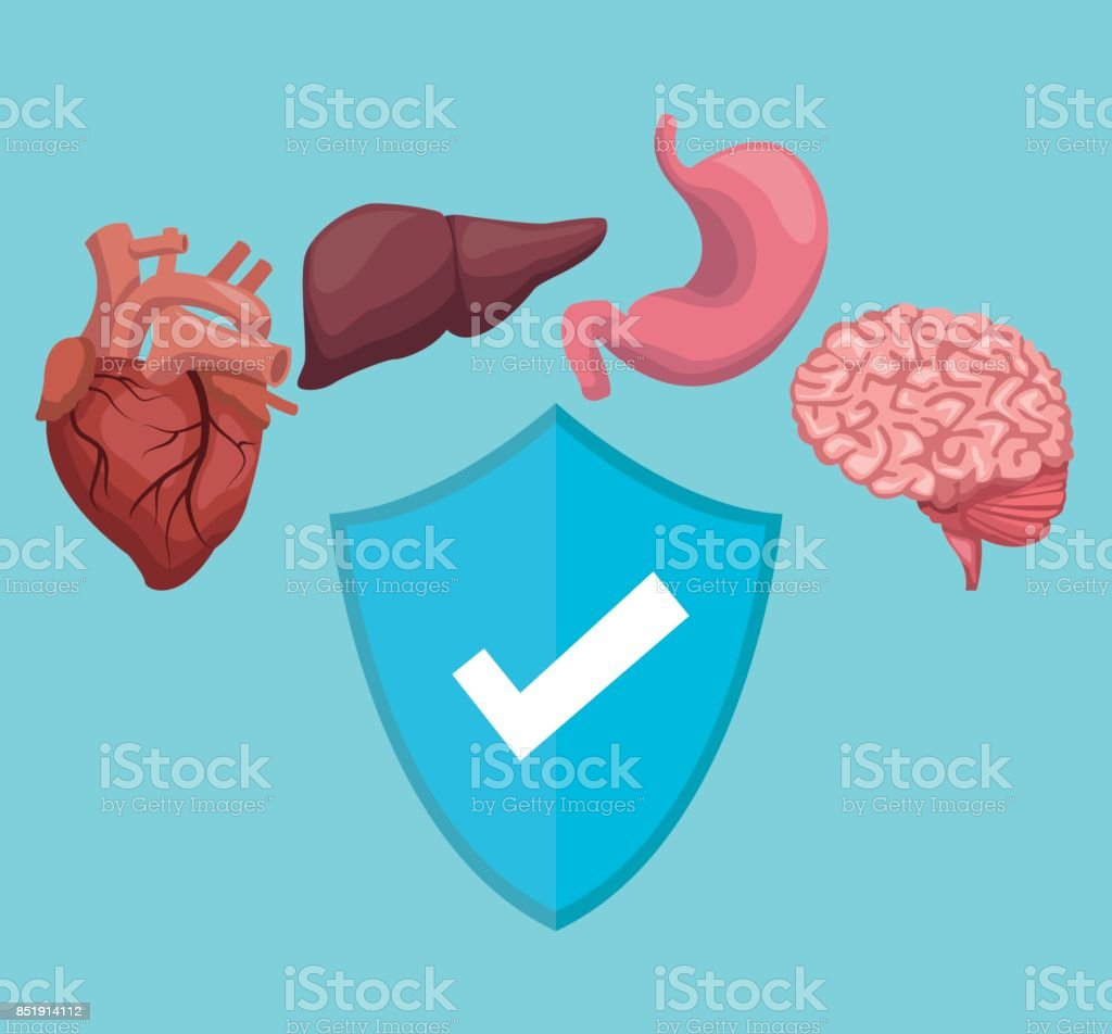 Color Background With Organs Human Body And Shield Healthy Symbol ...