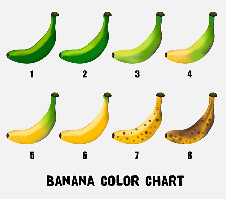 Color chart of banana from young green to yellow until ripe.