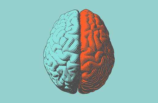 Color drawing brain illustration in vintage style