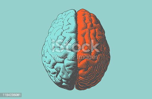 Vintage engraving hemispheres human brain illustration in top view isolated on light green background