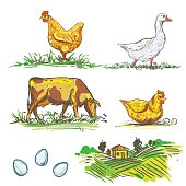color farm and chicken and egg, cow, goose sketches.