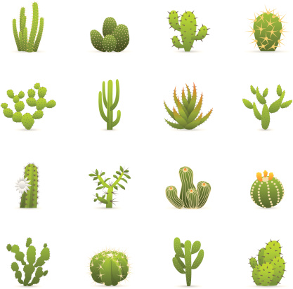 Color Icons - Cactuses Cacti