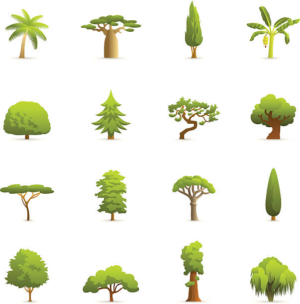 stockillustraties, clipart, cartoons en iconen met color icons - trees - cipres