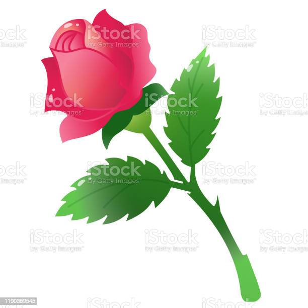 Color image of scarlet rose on white background flowers vector vector id1190389545?b=1&k=6&m=1190389545&s=612x612&h=jwuqh9zuruc9v6r s nzqvavaghvpgevtza cfqlnnc=
