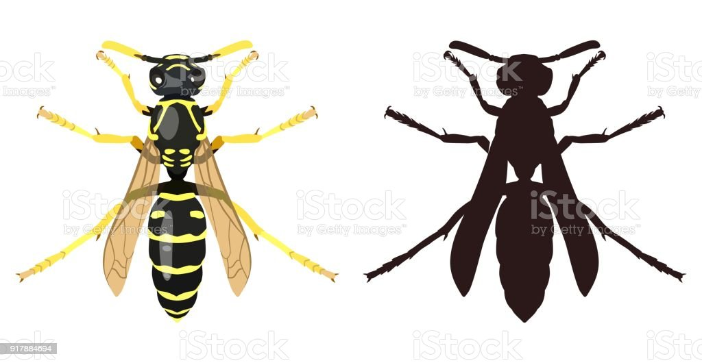 Color image of wasp and its silhouette. Vector illustration vector art illustration