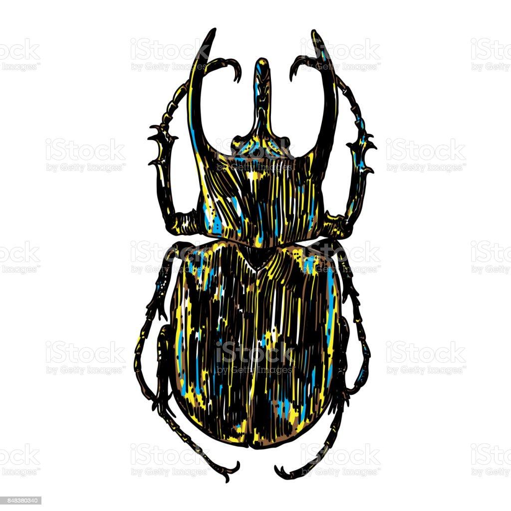 Farbe Insekten Käfer Bug Bunte Arten In Vintage Alte Handgezeichnete