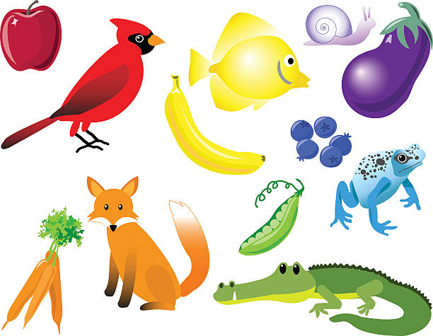 color matching animals, fruit, and vegetables - like two peas in a pod stock illustrations, clip art, cartoons, & icons