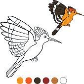 Color me: hoopoe. Cute beautiful hoopoe flies.