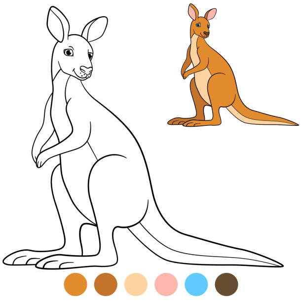 Best Funny Kangaroo Drawings Illustrations, Royalty-Free ...