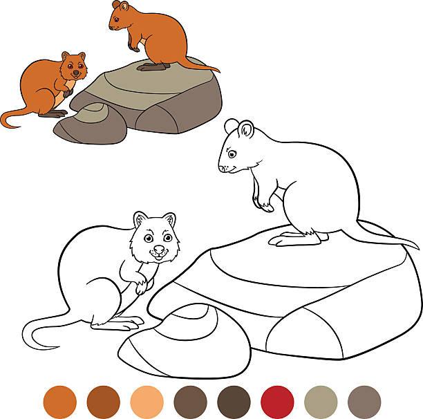 Top 60 Quokka Clip Art, Vector Graphics And Illustrations