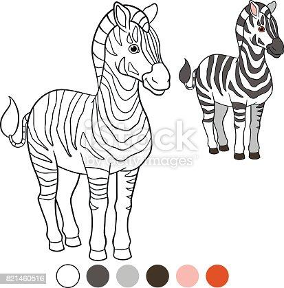 Color me: zebra. Cute beautiful zebra stands and smiles.