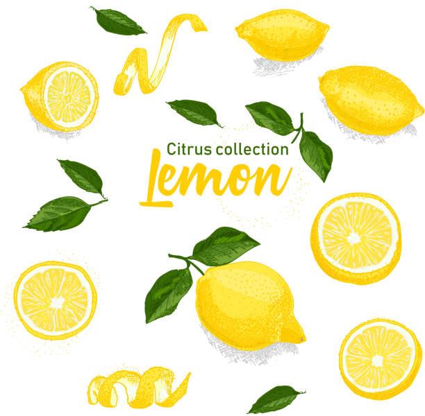 手描き熱帯柑橘系の果物の色のセットです。レモン。インク スケッチ スタイル。テンプレートのメニュー、レシピ、グリーティング カードをお勧めします。 - レモン点のイラスト素材/クリップアート素材/マンガ素材/アイコン素材