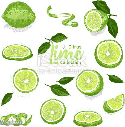 Color set of hand drawn tropical citrus fruit. Lime. Ink sketch style. Good idea for templates menu, recipes, greeting cards. Vector illustration