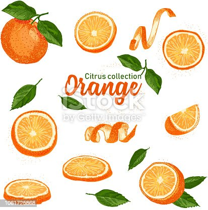 Color set of hand drawn tropical citrus fruit. Orange. Ink sketch style. Good idea for templates menu, recipes, greeting cards. Vector illustration
