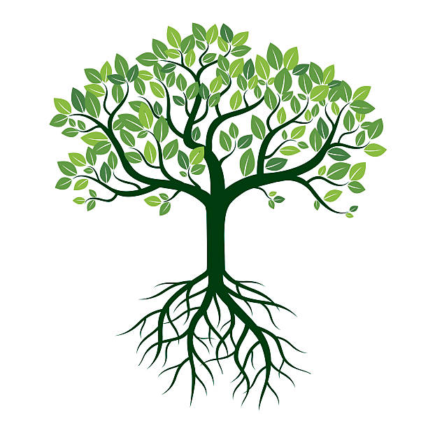 Color Tree and Roots. Vector Illustration. Color Tree and Roots. Vector Illustration. origins stock illustrations