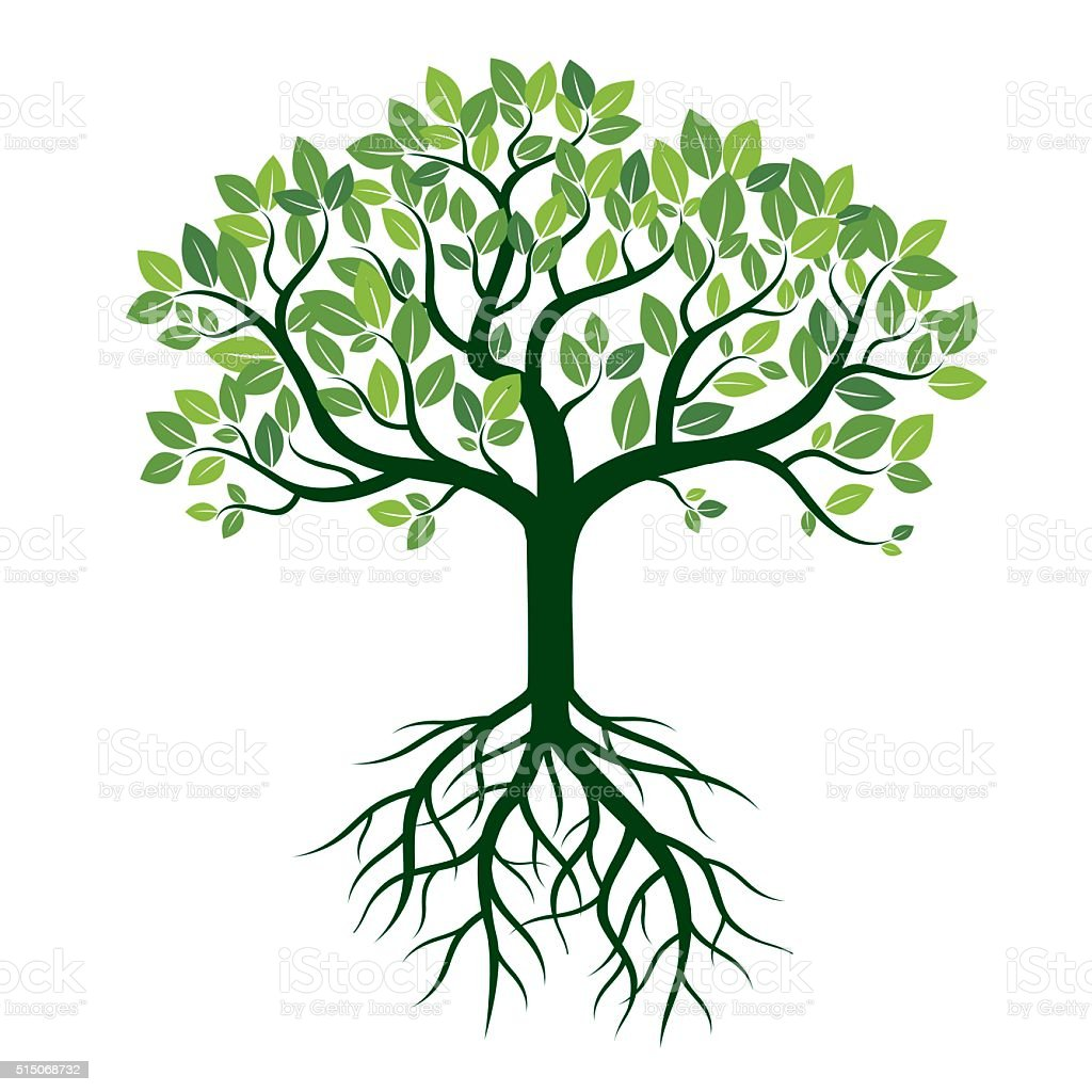 Tree Drawing With Color. Color Tree And Roots Vector With Tree ...