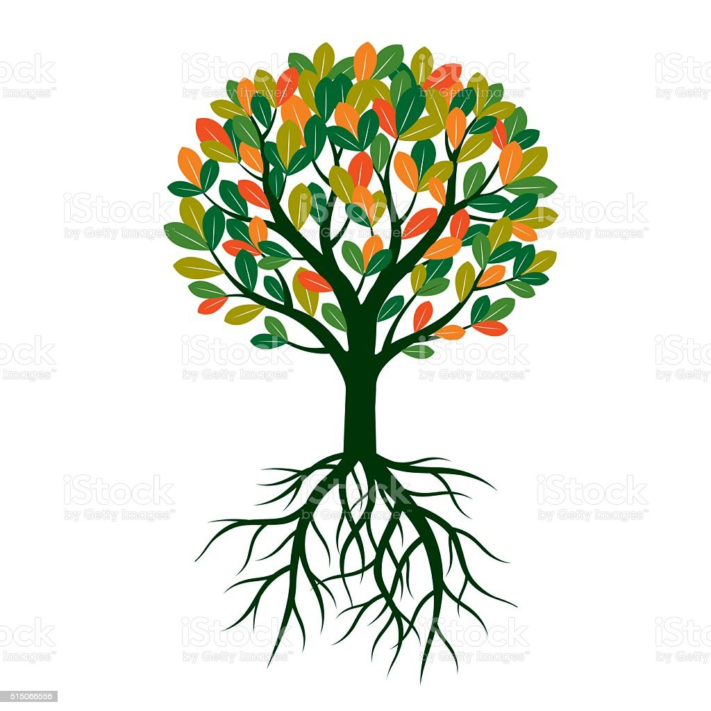 Color Tree Leafs And Roots Vector Illustration Stock Vector Art ...