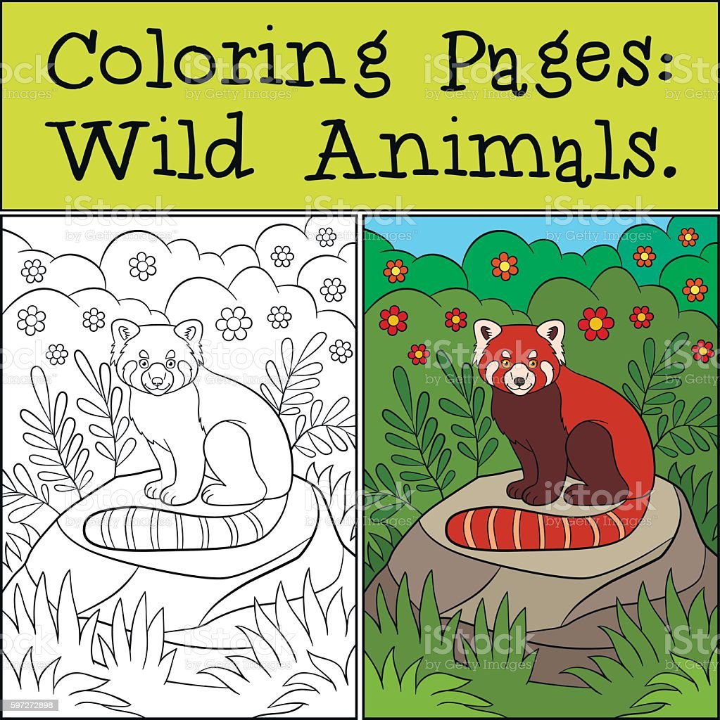 color_example_wild animals_red panda01 royalty-free colorexamplewild animalsred panda01 stock vector art & more images of activity
