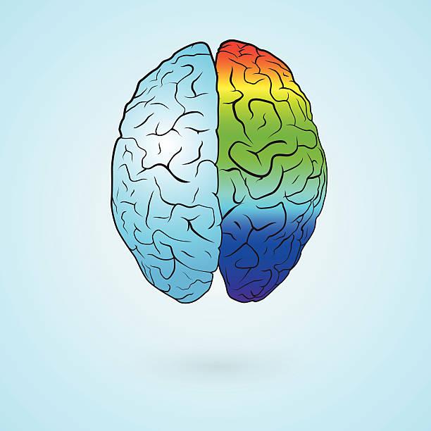 illustrazioni stock, clip art, cartoni animati e icone di tendenza di cervello a colori - mancino