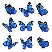 Colored butterflies. Flying beautiful insects wedding butterfly with decorated wings vector. Illustration insect butterfly spring, pattern realistic wings in blue colored
