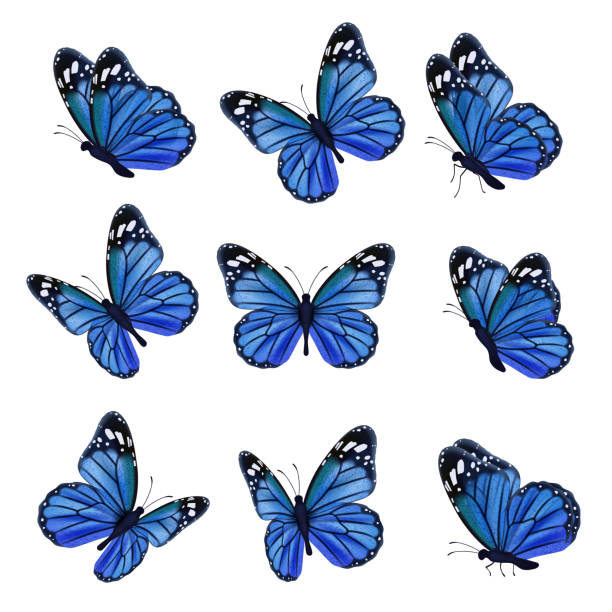 Colored butterflies. Flying beautiful insects wedding butterfly with decorated wings vector Colored butterflies. Flying beautiful insects wedding butterfly with decorated wings vector. Illustration insect butterfly spring, pattern realistic wings in blue colored butterfly stock illustrations