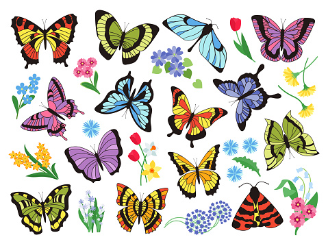 Colored butterflies. Hand drawn simple collection of butterflies and flowers isolated on white background. Vector graphic collection