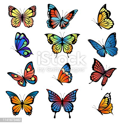 Colored butterflies. Vector pictures of butterflies set. Butterfly summer with colored pattern wings illustration
